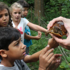 Kids encounter a 3 Toed Box Turtle at the Nature Discovery Center